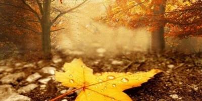 تعرف على أبرز الأمراض المصاحبة لفصل الخريف