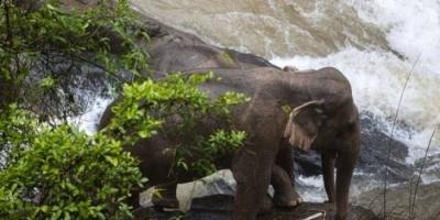 نفوق 6 أفيال برية عقب سقوطها في شلال مياه بتايلاند