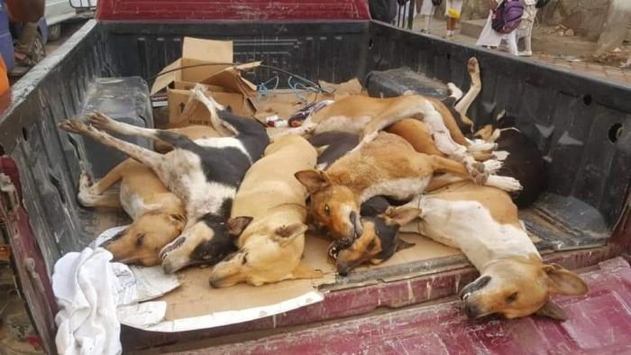 حملة لمكافحة الكلاب الضالة بمديرية صيرة بعدن