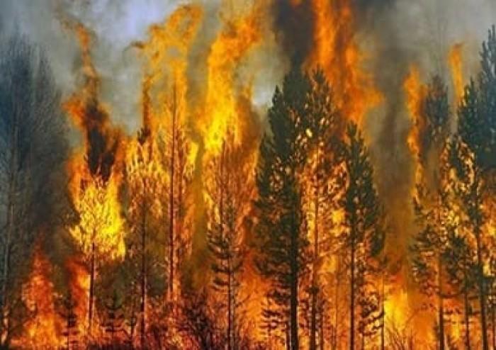نشوب حرائق غابات مميتة جنوب كاليفورنيا وإخلاء إلزامي لآلآف السكان