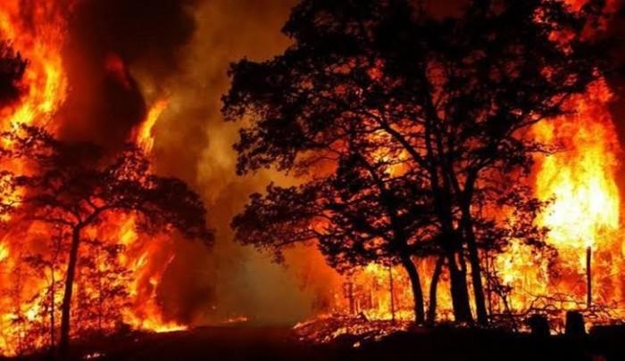 أستراليا.. مصرع شخص ودمار 100 منزل جراء حرائق الغابات