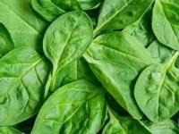 السبانخ.. مجموعة عناصر غذائية تفيد جسم الإنسان