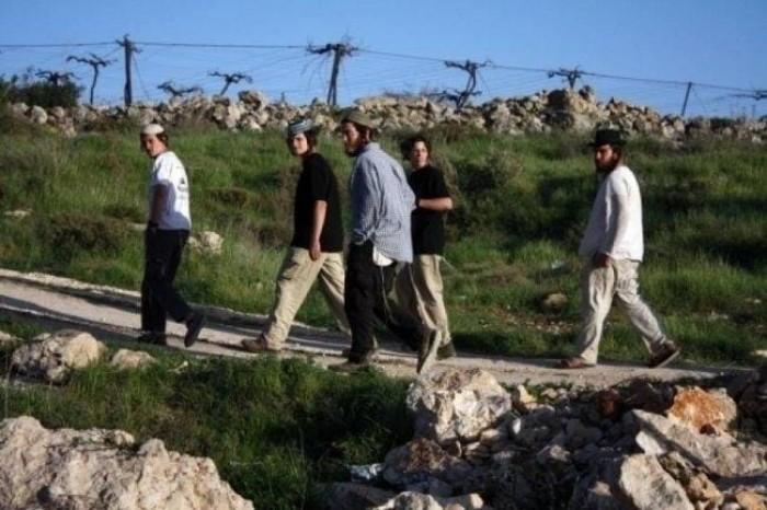 مستوطنون إسرائيليون يضرمون النار بأشجار زيتون فى سبسطية شمال غرب نابلس
