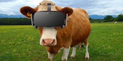 لتحسين جودة الحليب.. روسيا تدلل أبقارها بالواقع الافتراضي