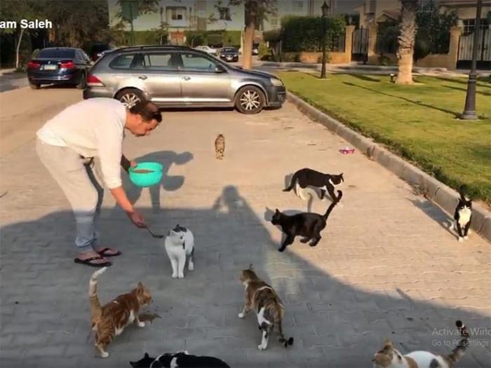"""بعد فيديو """"قطط الشوارع"""".. مدحت صالح ينال إشادات الجمهور"""