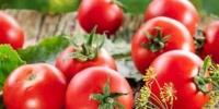 موقع طبي يعدد فوائد الطماطم الصحية على جسم الإنسان
