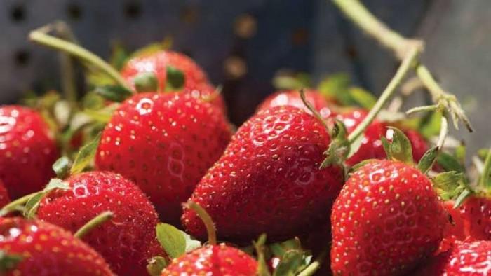 تحمي الجسم من السرطان.. تعرف على فوائد الفراولة