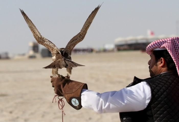 """باكستان تقبض على 7 مواطنين قطريين لمحاولتهم صيد طائر """"الحبارى الأفريقي"""""""
