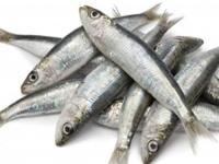 يحمي من الشيخوخة المُبكّرة.. فوائد سمك السردين عديدة