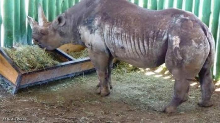 نفوق أنثى وحيد القرن الأكبر سنًا في العالم
