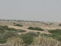 مليشيا الحوثي تناوش القوات المشتركة في الجاح