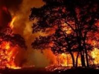 انتشال جثث ثلاثة من رجال الإطفاء الأمريكيين في حرائق الغابات باستراليا