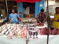 أسعار الأسماك تقفز في أسواق أبين