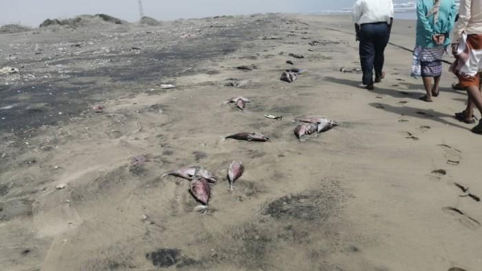 """""""انتقالي أبين"""" يتهم سفن الصيد بالتسبب في نفوق الأسماك (صور)"""