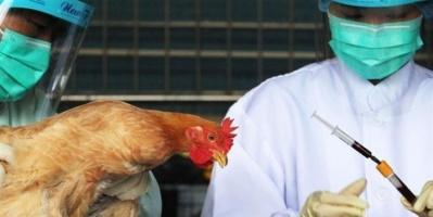 وباء إنفلونزا الطيور يعود من جديد ويجتاح ٨ دول