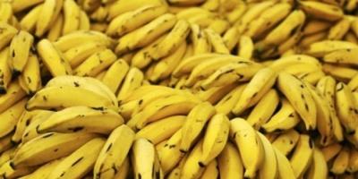 فوائد الموز على جسم الإنسان عديدة.. تعرّف عليها