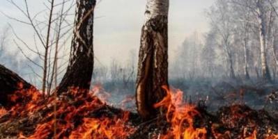 اندلاع حرائق هائلة في غابات بشمال إيران