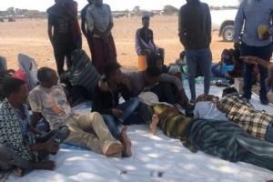 الدولية للهجرة: 138 ألف مهاجر أفريقي فروا إلى عدن