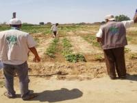 بدعم منظمة ادرا ..توزيع 30 مضخة للمزارعين في تبن بلحج