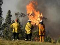 أستراليا تجري تحقيقا عاليا المستوى بشأن حرائق الغابات