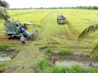تحذير من خسائر محتملة للزراعة في تايلاند بسبب الجفاف الشديد