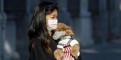 «كورونا» ينتقل من الإنسان إلى الحيوان في هونج كونج