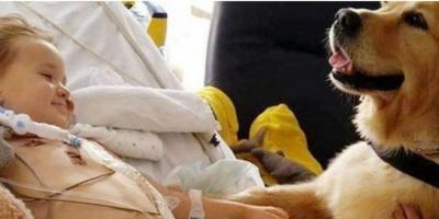 طفل يعود لوعيه من حالة دماغية نادرة.. والسبب «كلب»