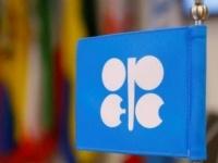 """""""أوبك"""" لا ترجح إجراء مشاورات طارئة بشأن تهاوي أسعار النفط"""