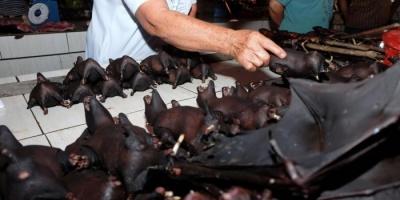 الغابون تحظر أكل الخفافيش بسبب كورونا