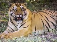 «كورونا» يخترق «نادية» في حديقة حيوان بنيويورك