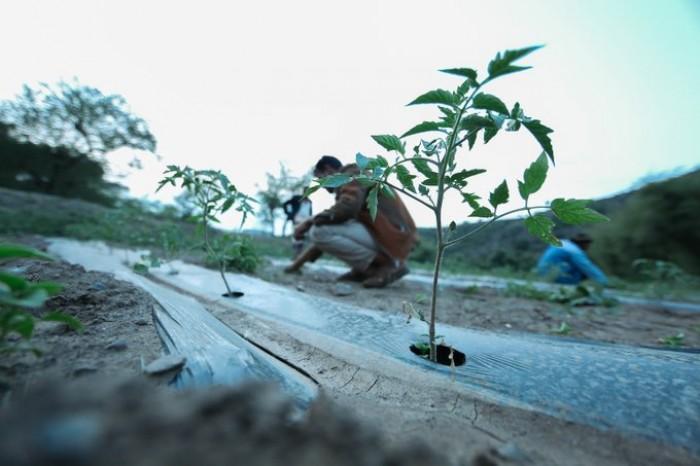 """""""البرنامج الإنمائي"""": مشروعات لدعم الزراعة والبيئة"""