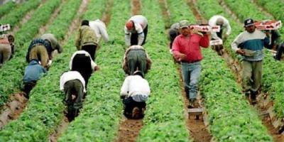 بسبب جائحة كورونا.. اليونان تستغيث لإنقاذ محصولها الزراعي