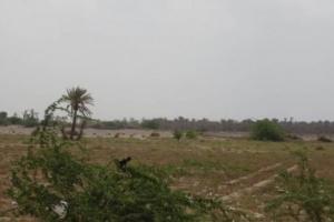 بالقذائف والرشاشات.. مليشيا الحوثي تستهدف سكان الجبلية