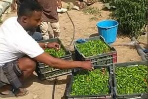 """""""فاو"""" يدعم 1400 مزارع بمشروع استدامة الدخل"""