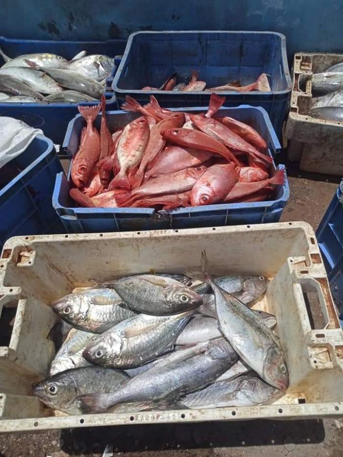 ضبط 5 صيادين مخالفين للائحة الصيد بحضرموت (صور)