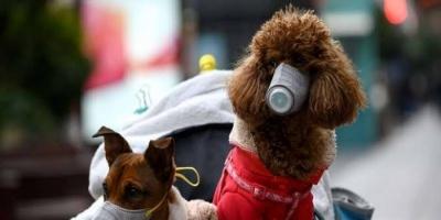 """""""ديلي ميل"""": الحيوانات ربما تصبح مستودع لفيروس كورونا المستجد"""