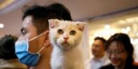 لقاحات للسيطرة على كوفيد-19 عند حيوانات مصابة تظهر نتائج إيجابية
