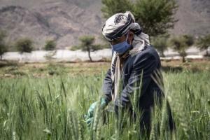 الإنمائي يمول ألف مزارع لمواجهة كورونا