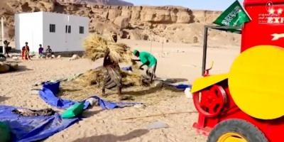 البرنامج السعودي يدعم 82 مزارعا في المهرة