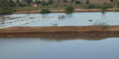 مياه الأمطار تنتشل أراضي لحج من التصحر