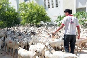 للعام الخامس.. 14 ألف مستفيد من المبادرة الإماراتية لتوزيع الأضاحي