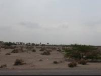 فوهات مدفعية الحوثي نحو الجبلية