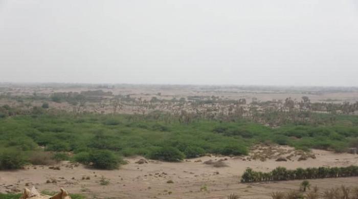 نيران مليشيا الحوثي تستهدف منازل التحيتا