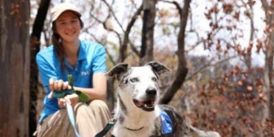 أستراليا تستعين بكلاب مدربة لإنقاذ 100 كوالا من الحرائق
