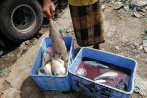 مصادرة أسماك نافقة بسوق ردفان