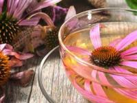 """دراسة سويسرية تحسم الجدل عن نبتة """"القنفذية"""" وعلاجها لفيروس كورونا"""