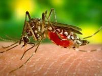 الملاريا تدخل الجزائر.. 1110 إصابة في 5 محافظات
