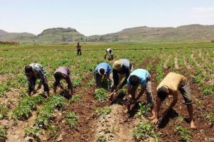 """""""زراعات"""" أتلفها إرهاب المليشيات.. جهود دولية لاستئصال سرطان الحرب الحوثية"""