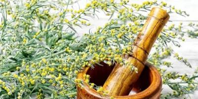 فوائد سحرية لنبتة الأفسنتين في علاج الملاريا