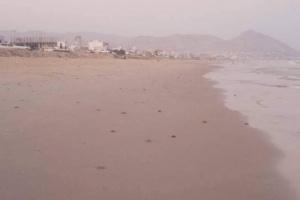 أجسام بحرية غريبة تغطي شواطئ المكلا (صور)